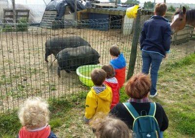 les enfants et les cochons